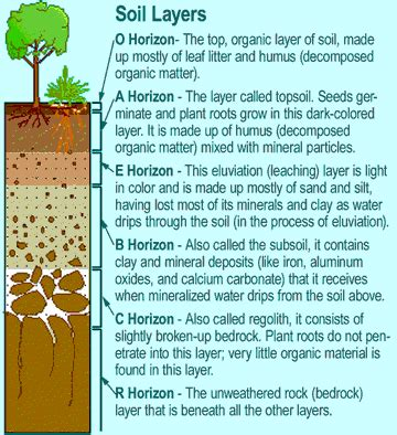 layers of the soil diagram soil layers soil layers forestry horticulture