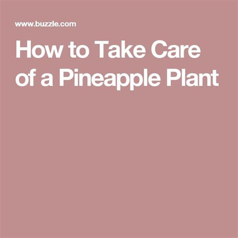 25 best ideas about pineapple plant care on pinterest