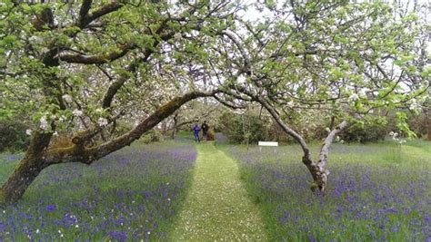Orchard Garden by Orchard Garden Picture Of Inish Beg Baltimore Tripadvisor