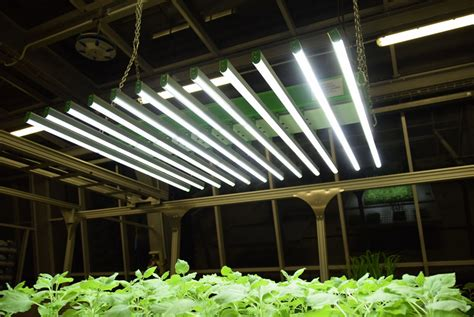 led lighting qubit phenomics