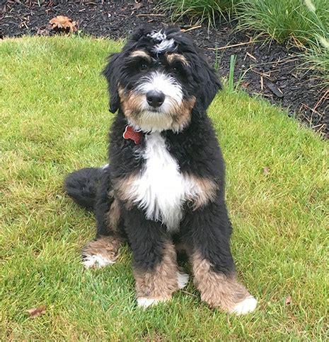 missouri puppy breeders puppies for sale missouri