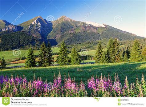 panorama fiori panorama con i fiori slovacchia della montagna di