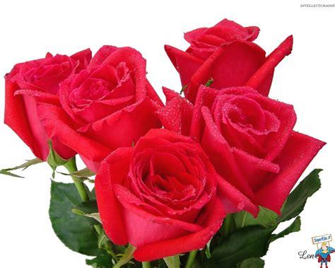 foto fiori rosse immagini 79 immagini in alta definizione hd