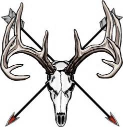 anatomy coloring book skull whitetail deer skull clipart