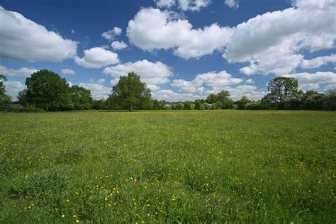 fabulous fritillary meadows the wildlife trusts
