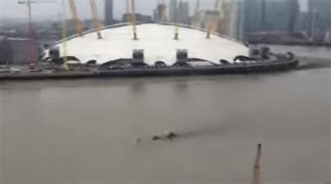 Loch Ness In Thames | creature in thames has the loch ness monster moved to