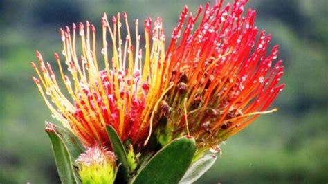 Blumen Und Pflanzen 2406 by Tiere Pflanzen In S 252 D Afrika Reise Berichte Und
