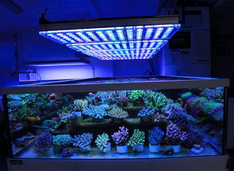 german store displays beautiful coral atlantik  led