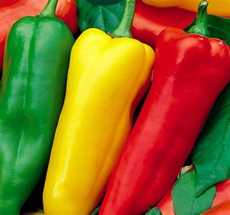 Isi 5 Biji Benih Biji Pepper Sweet Romano Mix Bibit Paprika Swee benih paprika romano mix