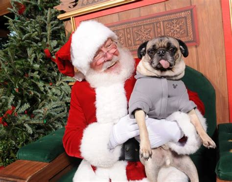 how to your not to jump on visitors dogs pictures with santa how to your not to jump on visitors collar