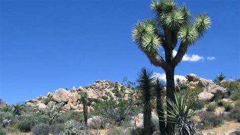 yucca valley california  center