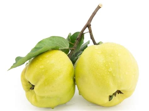 1 fruit without refuse 8 surprising benefits of quince organic facts