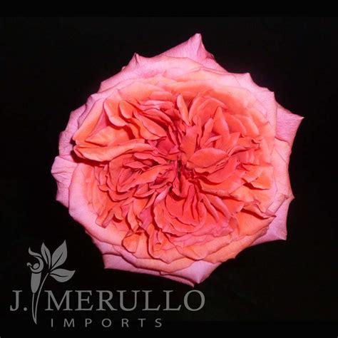 Flowers In A Vase Images J Merullo Imports Wholesale Flowers