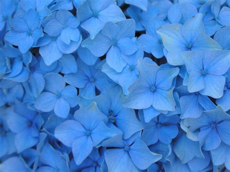Blue Floral flowers wallpapers