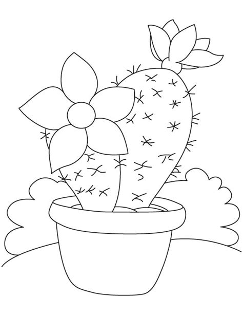 cactus flower coloring page free cactus flower coloring pages