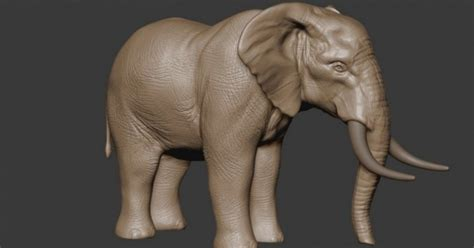 zbrush elephant tutorial sculpting an elephant with isaac oster evermotion