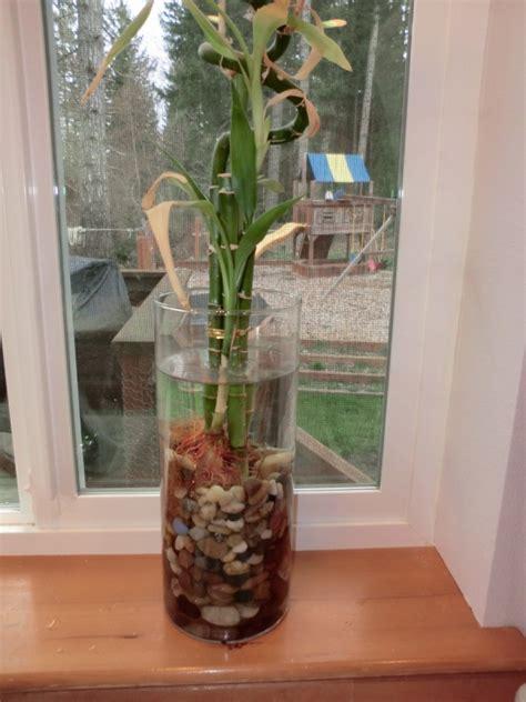 hm plant big floor vase growing plants in water thriftyfun