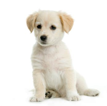 new puppy care how to care for your new puppy