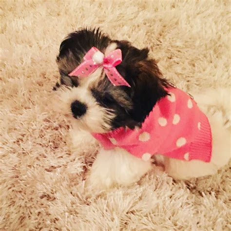 worldwide puppies and kittens worldwide puppies kittens 30 photos 33 reviews pet stores 2560 w hwy