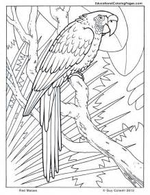 cool coloring cool coloring sheets animal coloring pages for az