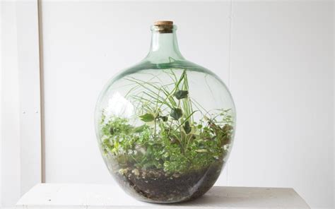 terrariums    whats   green fingered