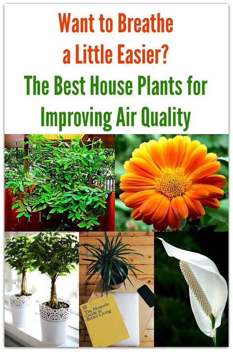 want to breathe a easier the best house plants for