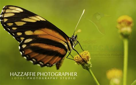 gua de insectos de hazzaffie guatemala esquipulas fot 243 grafo naturaleza aves insectos bosques verde