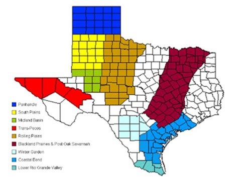 cotton production regions of texas