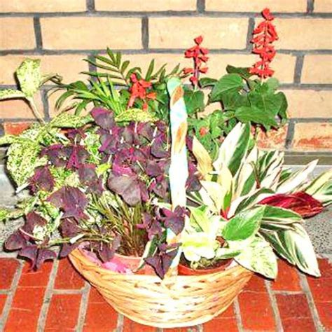 live indoor plants live potted indoor plants assorted indoor plants