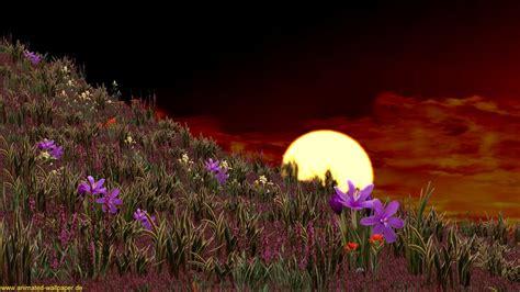 blumen fürs fensterbrett die 73 besten animierte hintergrundbilder f 252 rs handy