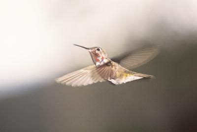 what month in north carolina should i take up my hummingbird feeder humming birds pinterest