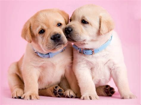 puppy friends brown puppy friend picture images photos pictures