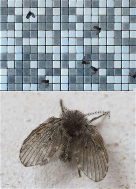 kleine fliegen im bad oelna de schwimmbadfliegen