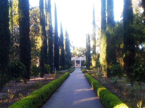 Awesome Italian Cypress Trees