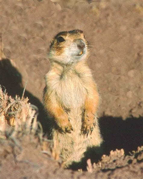 prairie arizona does berlitz offer a course in prairie animalwise