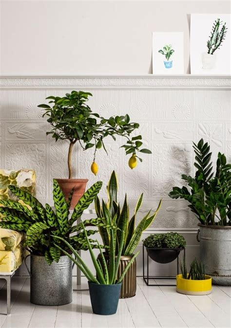 interior garden plants 1000 ideas about house plants on pinterest houseplant