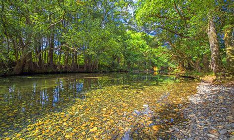 rosewood river bellingen clear water gravel trees