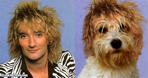 stewarts dogs rod stewart his pictures freaking news