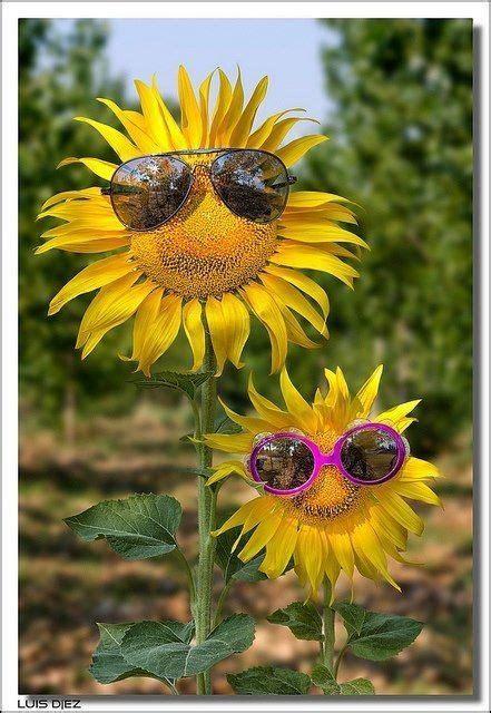 imagenes de buenos dias amor con girasoles girasoles buenos dias buenos dias pinterest
