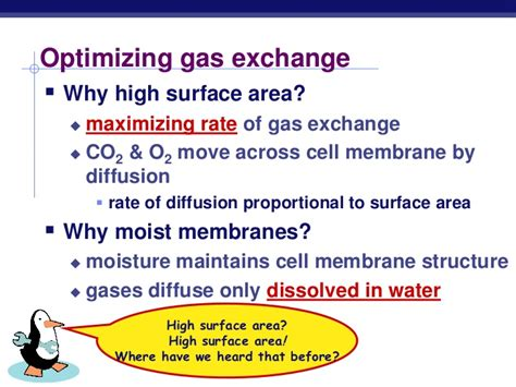 gas exchange across respiratory surfaces boundless biology chapter 42 respiration