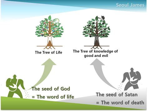 tree meaning shincheonji quot good seed quot shincheonji testify the tree of
