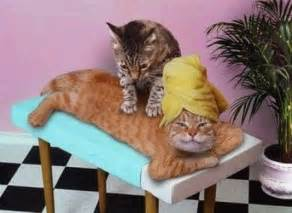 best tv black friday deals 2011 cat funny massage massages cats lol laughs laughing icon