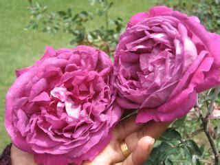 imagenes de flores naturales gratis flores rosas natural baixar fotos gratuitas