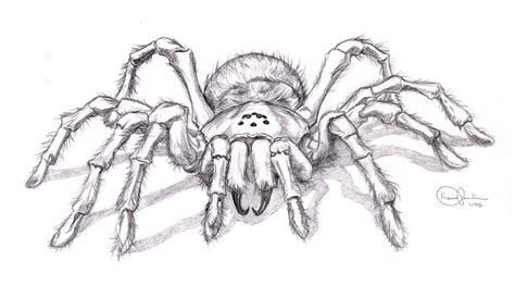 tattoo design spider by kennygordon on deviantart