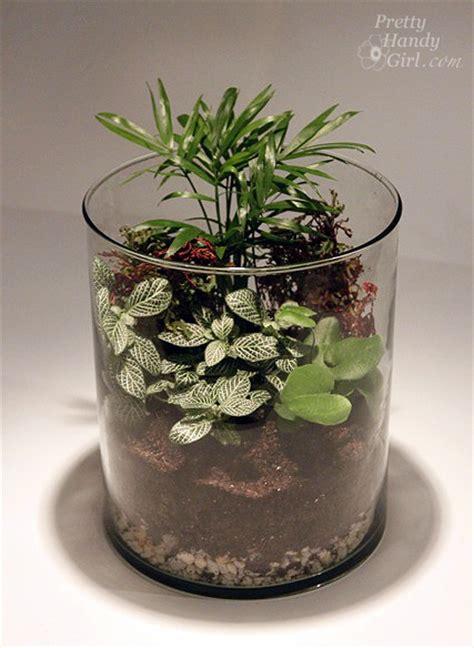 terrarium  save hundreds  dollars