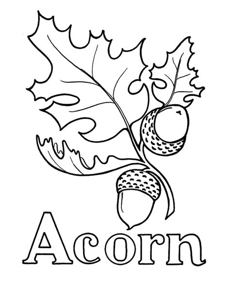 coloring page of acorn acorn coloring page az coloring pages
