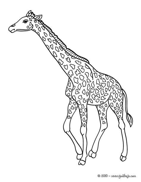 imagenes de jirafas animadas para dibujar dibujos para colorear una jirafa es hellokids com