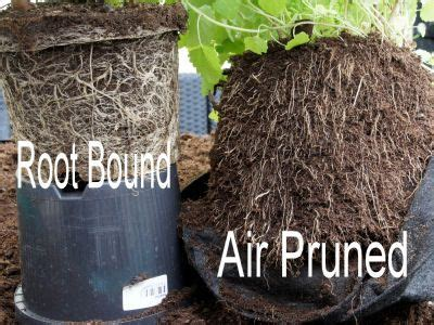 air pruning   technique designed  encourage  plant