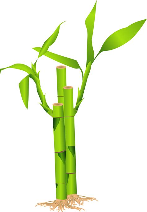 bamboo clip clipart bamboo