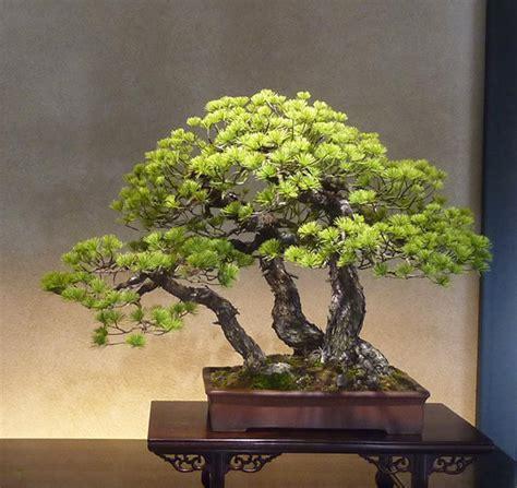 here s a thought bonsai bonsai meets pop bonsai bark